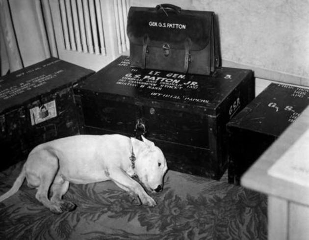 MjM1OTA2MQ5757historical-photos-rare-pt2-general-george-s-patton-dog